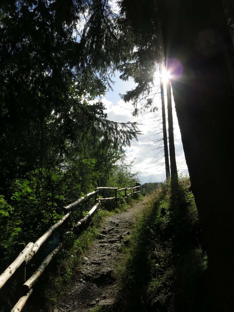 Waldweg an Burg Reinhardstein