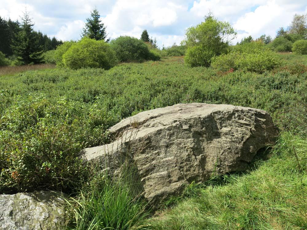 Hohes Venn - Felsen 2